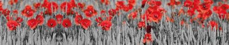 red poppies black white
